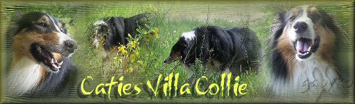 caties banner villa collie